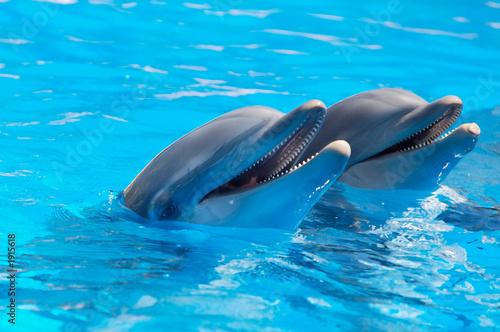 Zdjęcie XXL szczęśliwe delfiny