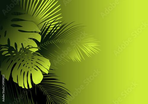 Papiers peints Vert chaux jungle