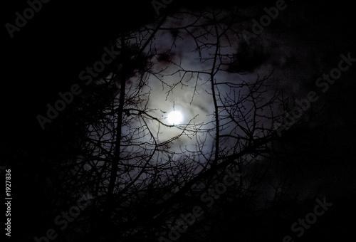 lune et arbre atmosphère inquiétante Plakat