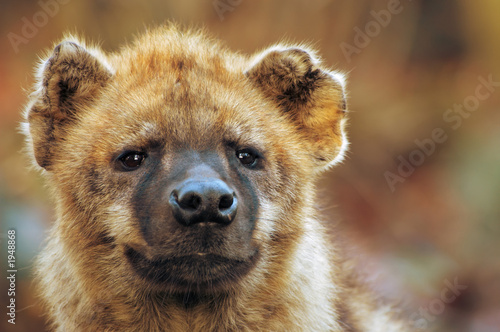 Tuinposter Hyena close-up of a hyena