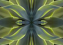 Kaleidoscope 7 - Agave Heart