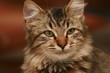 un joli petit chat
