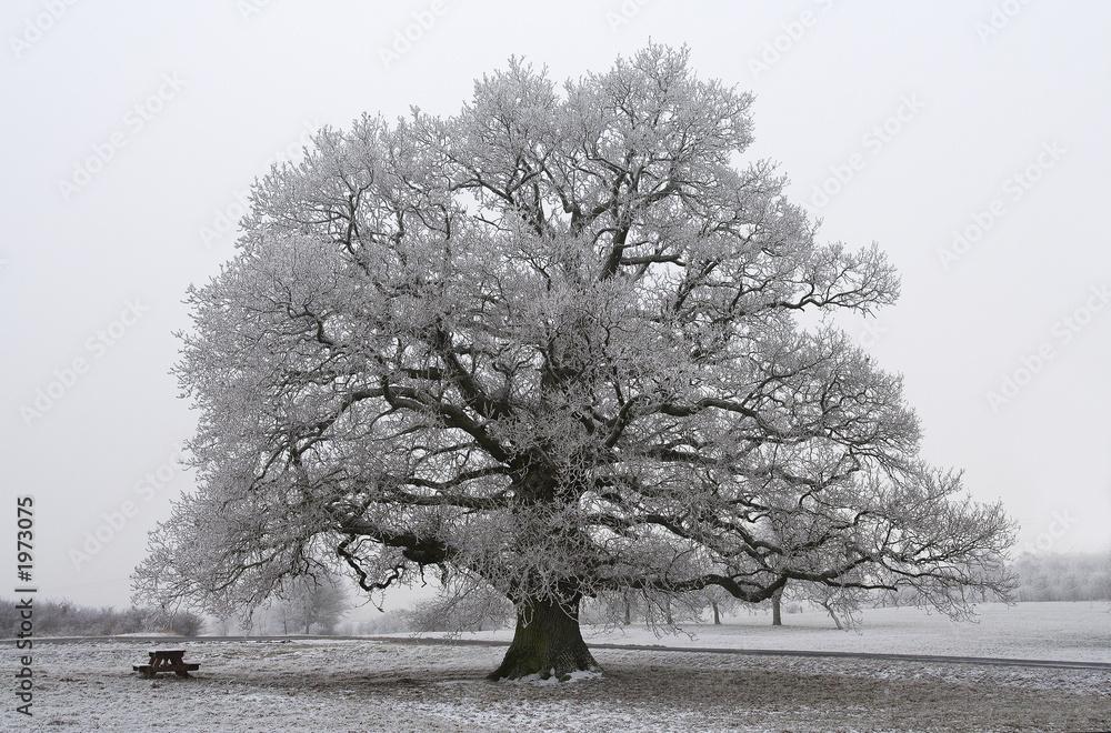 chêne noir et blanc