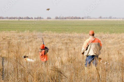 Fotobehang Jacht young quail hunter