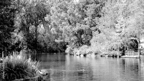 monochrome forest lake