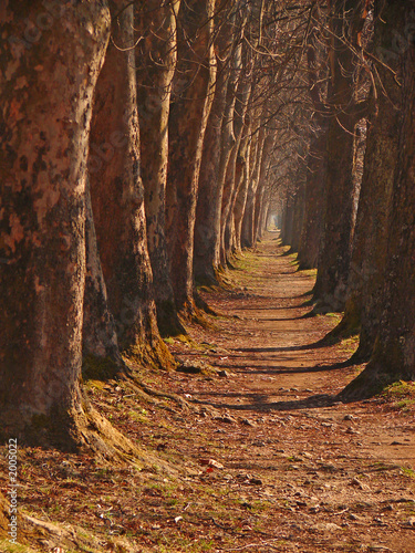 long, long, long  alley #2005022
