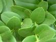 Leinwanddruck Bild - green leaves