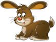 canvas print picture rabbit