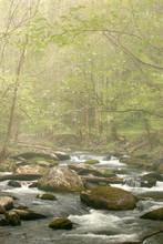 Spring Stream In Fog