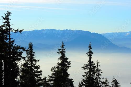 Aluminium Prints fir trees over a foggy valley