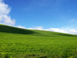 canvas print picture - grüne wiese vor blauem himmel