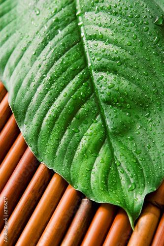 Plissee mit Motiv - green leaf (von Olga Lyubkin)