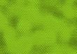 leguan haut iguana skin