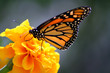canvas print picture monarch butterfly