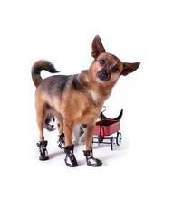 Dog And Wagon