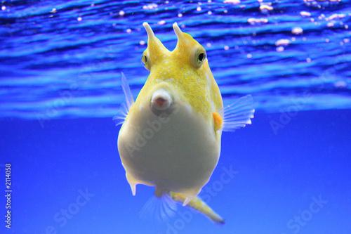 Foto-Schiebegardine Komplettsystem - fisch enface