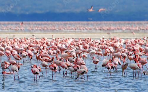 Garden Poster Flamingo flamingos on lake