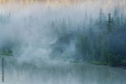 Wall Murals Forest aestival landscape against fog.