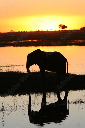 Obrazy na płótnie Canvas eléphant au coucher du soleil