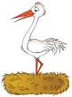canvas print picture white stork
