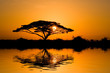 Leinwandbild Motiv acacia tree at sunrise
