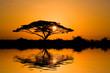 Leinwanddruck Bild - acacia tree at sunrise