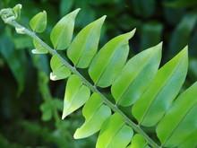 Leafy Branch