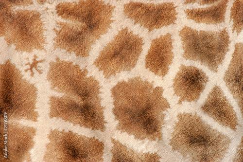 Photo sur Aluminium Girafe giraffe skin