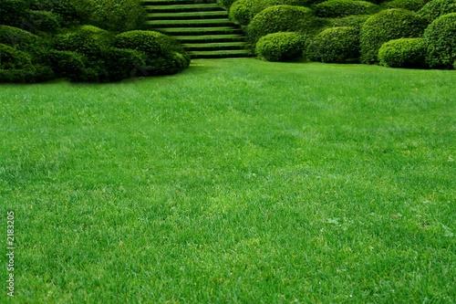 Photo sur Toile Herbe garden