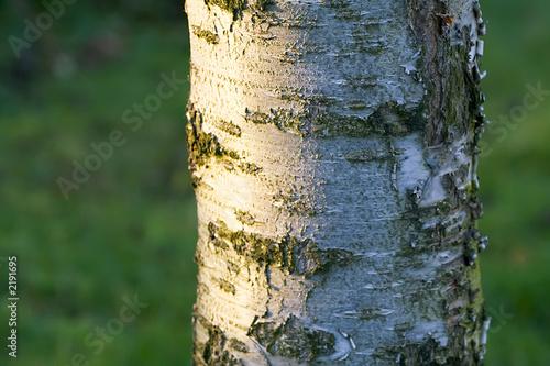 Photo tronc d ' arbre en gros plan avec écorce