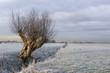 Leinwandbild Motiv the frozen willow