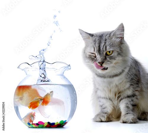 Foto-Plissee - cat and fish (von Ronen)