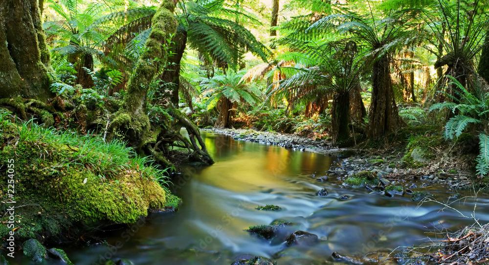 Fototapeta rainforest river panorama