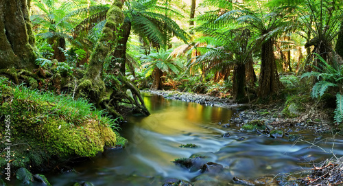 Fotobehang Australië rainforest river panorama