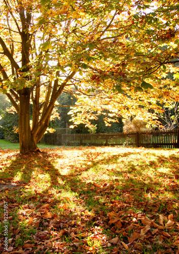 drzewa-i-liscie