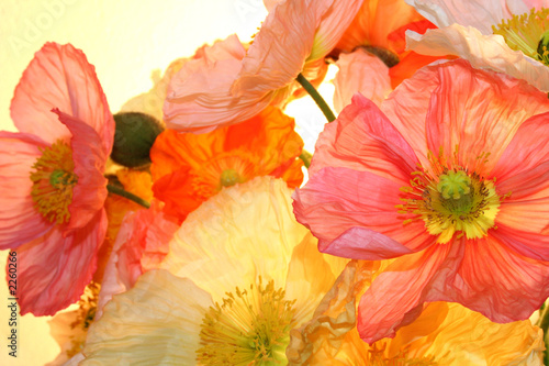 Deurstickers Klaprozen poppy flower