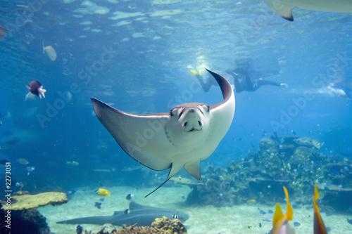 Fotoposter Onder water eagler