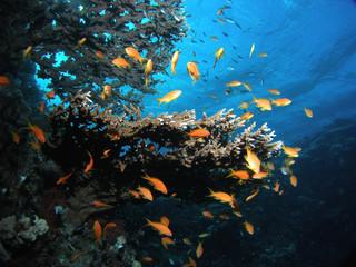 Fototapeta na wymiar underwater view