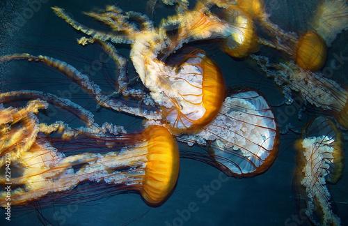 Photo  jelly