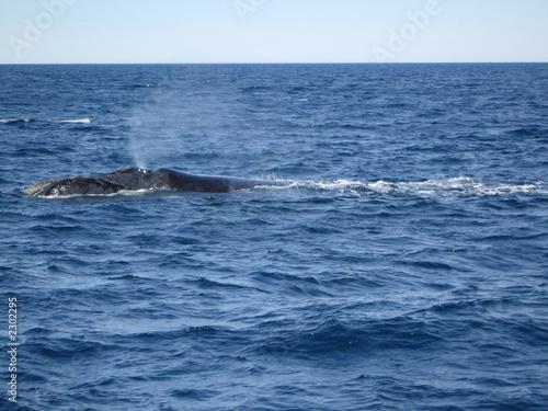 Valokuva  whale's blowhole