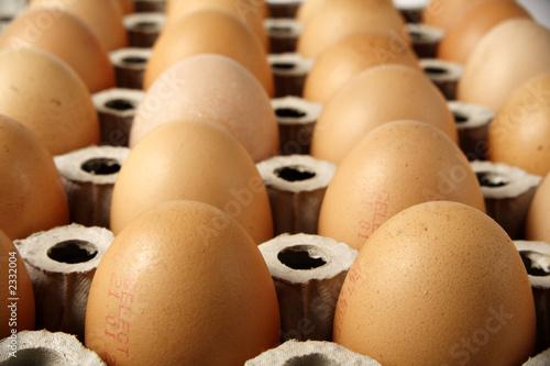 Valokuva  zwei dutzend braune hühnereier