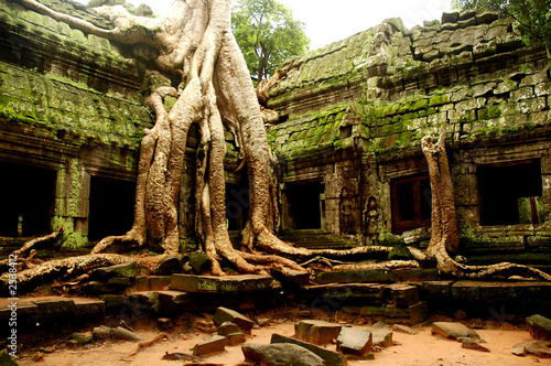 Photo  ta prohm, angkor wat