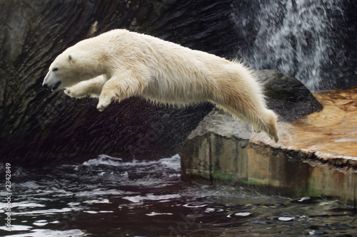 Photo jumping polar bear