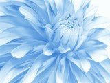 soft blue floral background for card