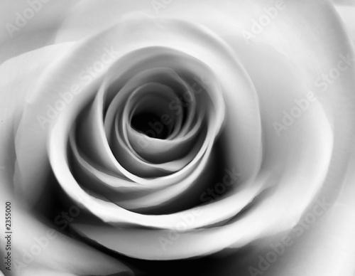 rose - 2355000