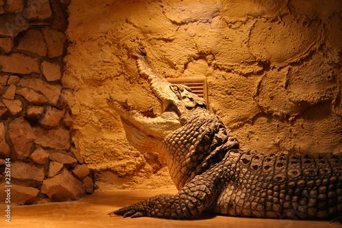 crocodile in a terrarium Wallpaper Mural