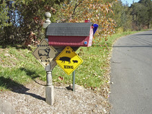 Mailbox In The Country