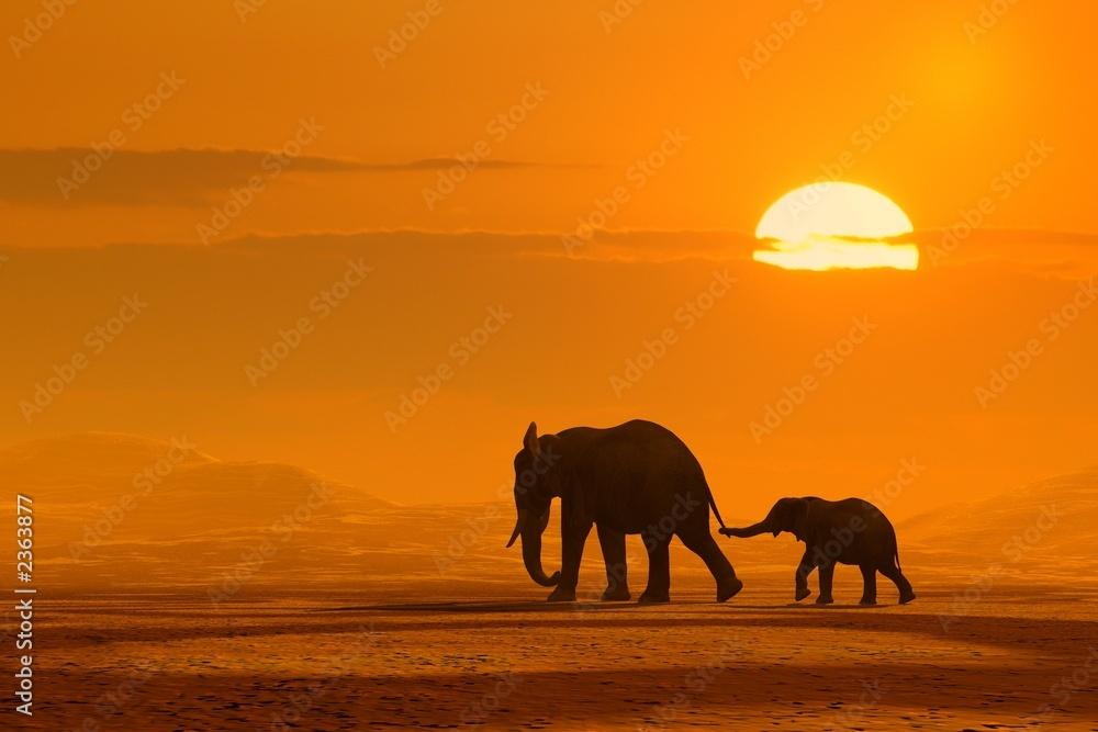 Fototapety, obrazy: Podróż słoni w zachodzie słońca