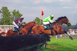 canvas print picture - steeplechase