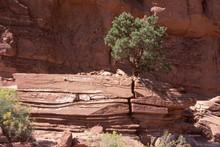 Tree Cracks Whole Rock